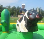 Layton riding the bull